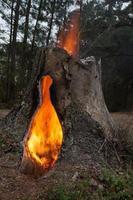 fogo escuro foto