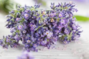 flores de lavanda com óleo essencial. conceito de spa e bem-estar. foto