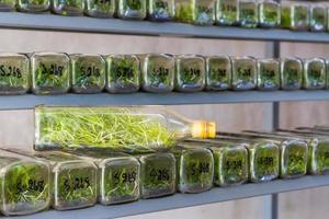 laboratório de orquídeas, cultura de tecidos de orquídeas em uma garrafa. foto