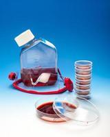 cultura celular ou experimento bacteriano foto
