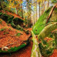 andando em terreno rochoso na floresta. carpathian, ucrânia, eur