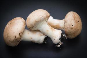 cogumelos foto