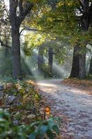 bela floresta de outono