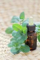 óleo essencial de hortelã foto
