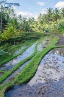 arrozais no templo gunung kawi em bali foto
