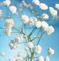 flores brancas, crescendo em uma planta foto