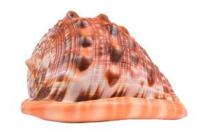 conchas do mar, isoladas no fundo branco foto