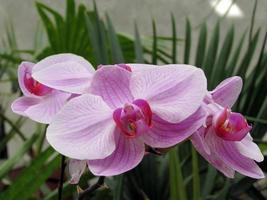 orquídea foto