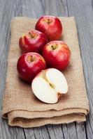 colheita fresca de maçãs foto