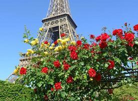 rosas com torre eiffel no fundo, paris, frança foto