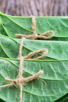 folha de betel comestível comer cultura da ásia foto