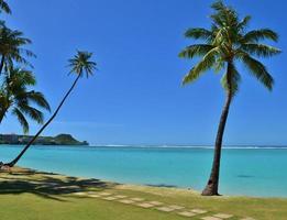 palmeiras em um paraíso tropical foto