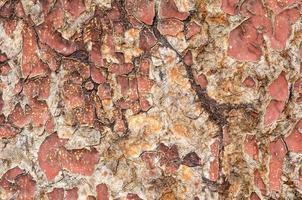 superfície de madeira rachada. foto
