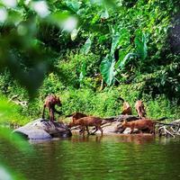 família asiática cão selvagem foto