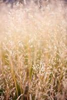 erva daninha delicada e grama na luz do sol da manhã
