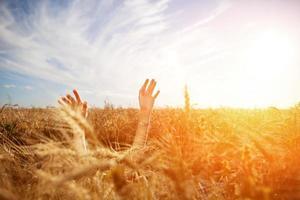 mãos da menina acima do campo de trigo