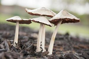 grupo de cogumelos selvagens foto