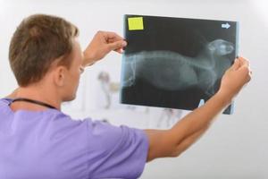 veterinário profissional envolvido no trabalho foto