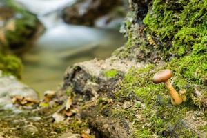 fungos na árvore