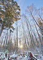 nascer do sol sobre a neve foto