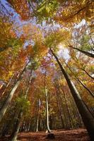 liściasty las jesienią foto