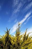 galho de árvore com fundo de céu azul foto