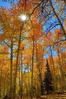 sol de outono brilhando através de árvores foto