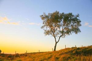 pôr do sol, parque de beacon hill, leistershire, reino unido.