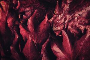 folhas de outono na mesa de madeira foto