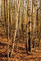 madeiras de outono