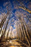 céu noturno com estrelas no inverno noite com árvores