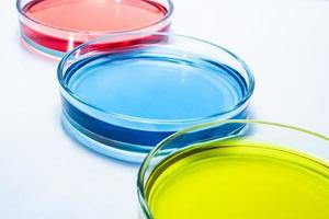 conjunto de placas de Petri com líquido colorido foto