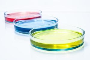 conjunto de placas de Petri com líquido de cor foto