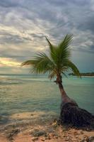 praia tropical com uma palmeira foto