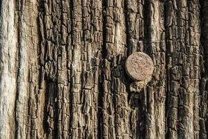textura de madeira do grunge foto