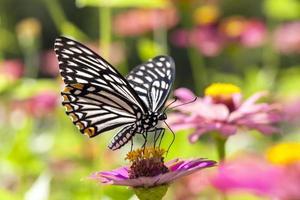 borboleta em flor
