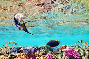 mundo subaquático com corais e peixes tropicais.
