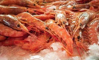 íon de lagosta vermelho gelo branco foto
