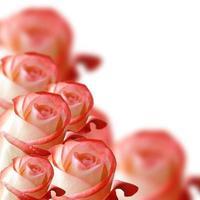 colagem de rosas laranja em fundo branco foto