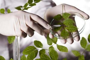 planta, tubo de ensaio nas mãos do cientista foto