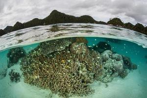 recife de coral em lagoa foto