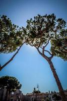 vista do céu de dois pinheiros de Roma