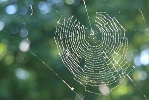 spinnennetz im gegenlicht foto