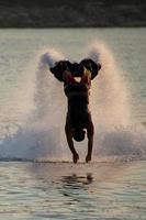 flyboarder em silhueta mergulhando para a frente em direção à câmera foto