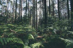 floresta brilhante foto