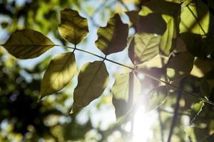 folhas retroiluminadas foto