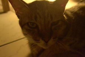 o gato com luz de fundo bonita foto
