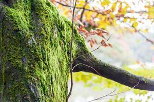 floresta de outono - cores aprimoradas