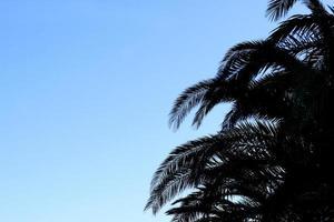 folhas de palmeira foto