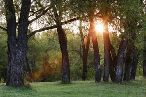 pôr do sol na floresta foto